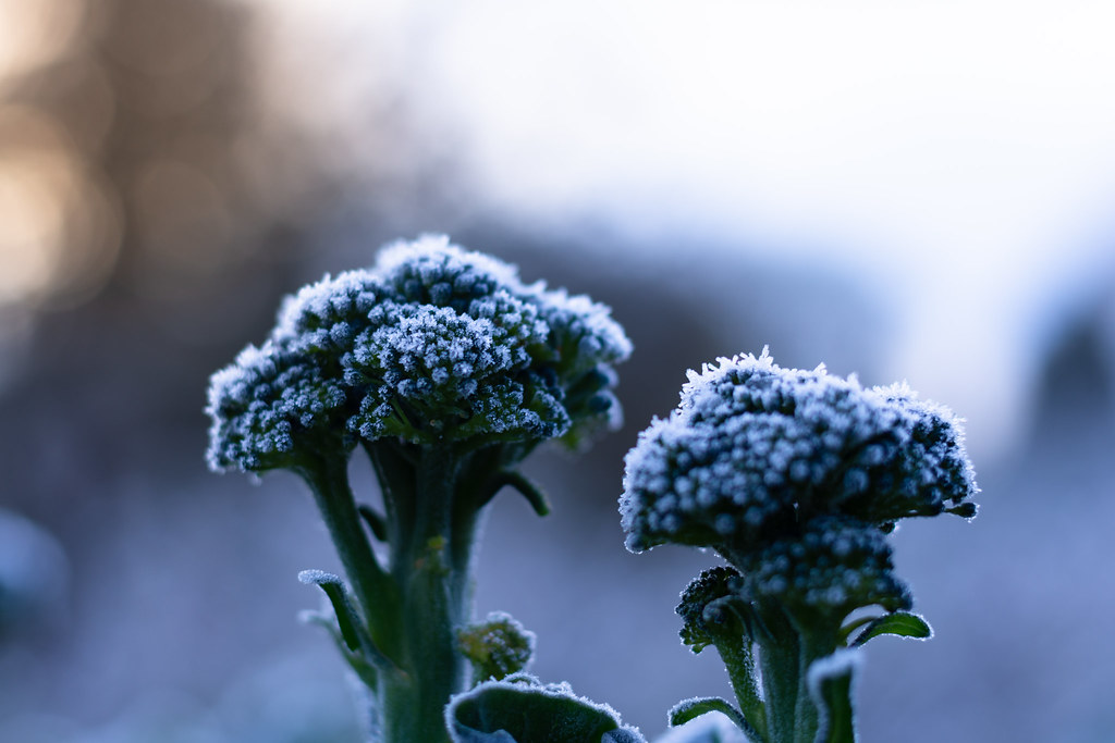 10 Practical Ways to Protect Plants from Frost