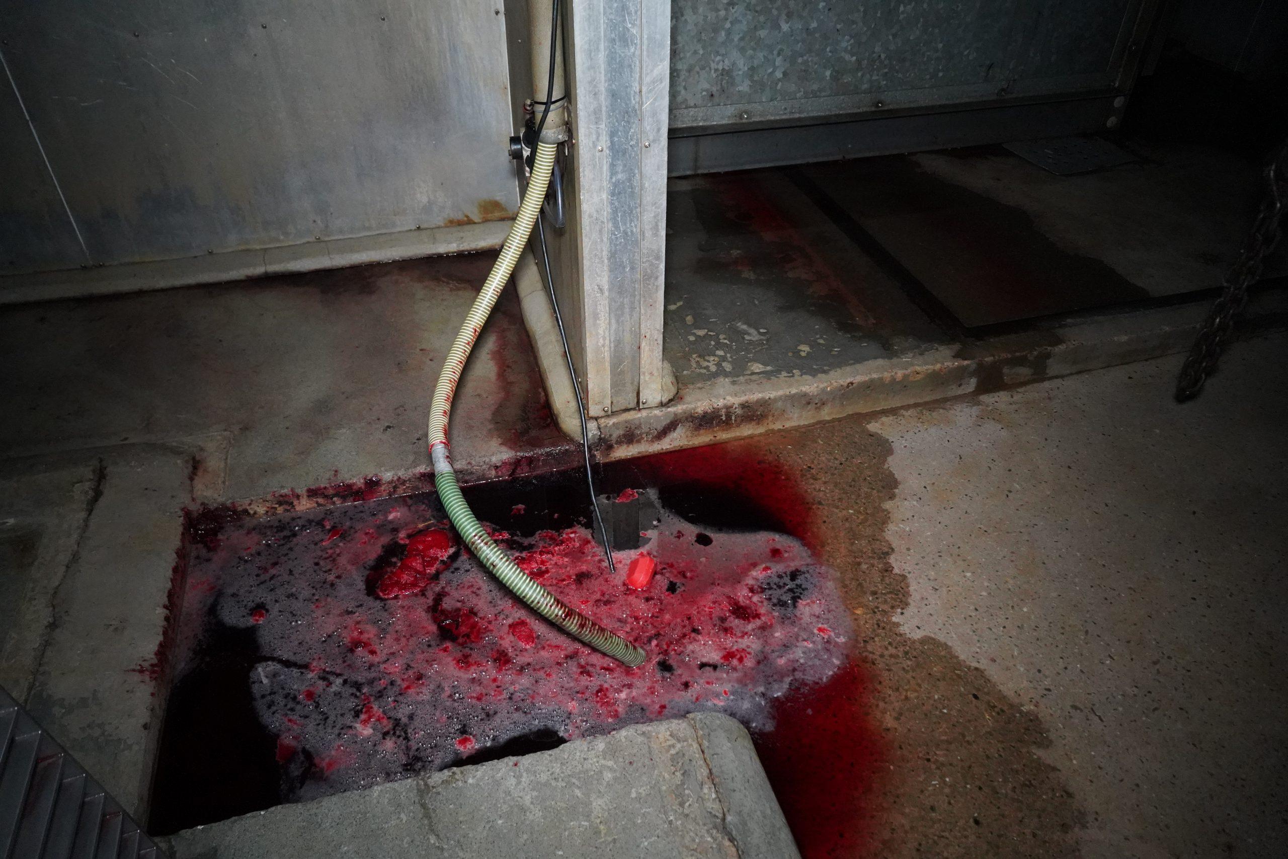 blood on ground