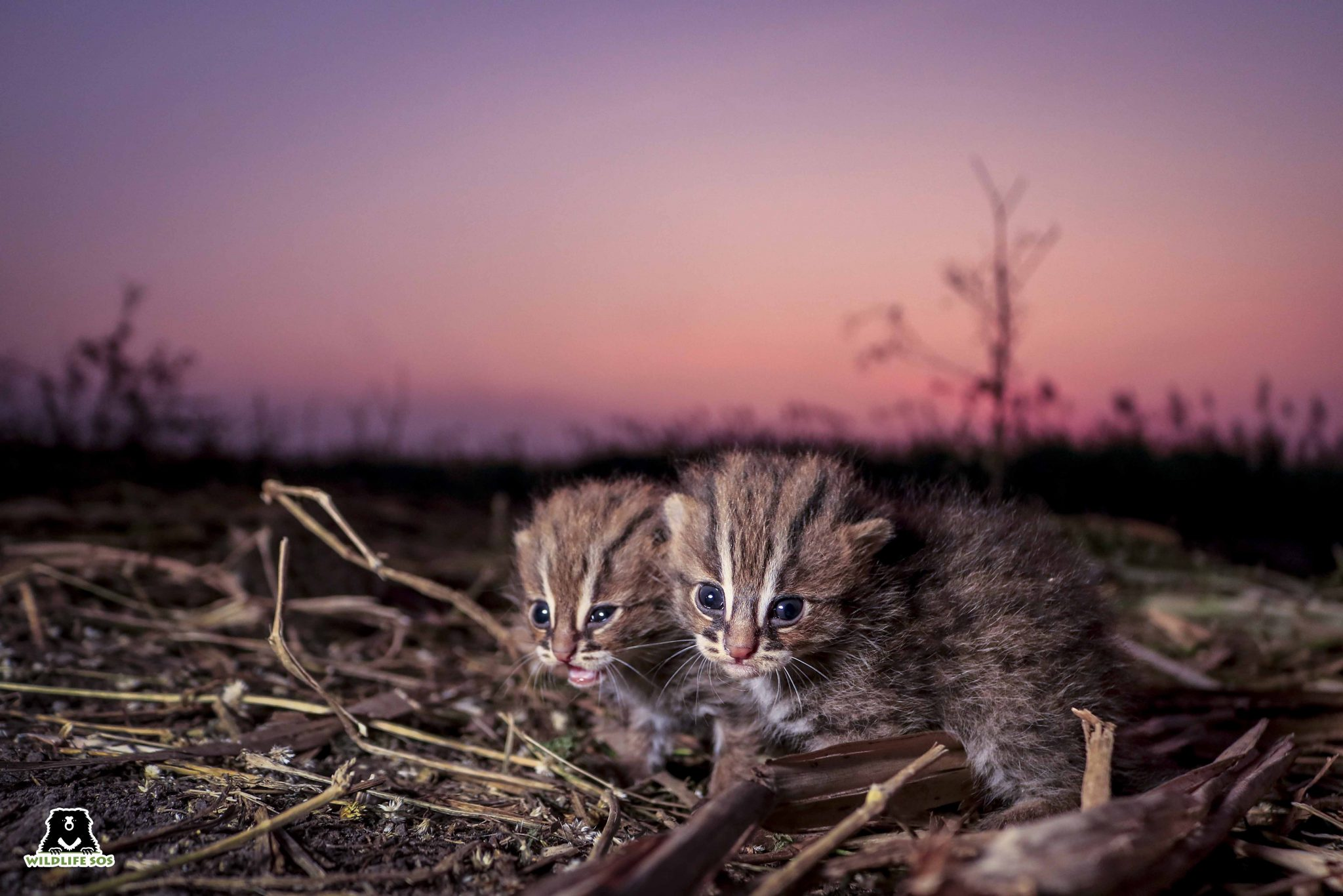 Courtesy of Wildlife SOS