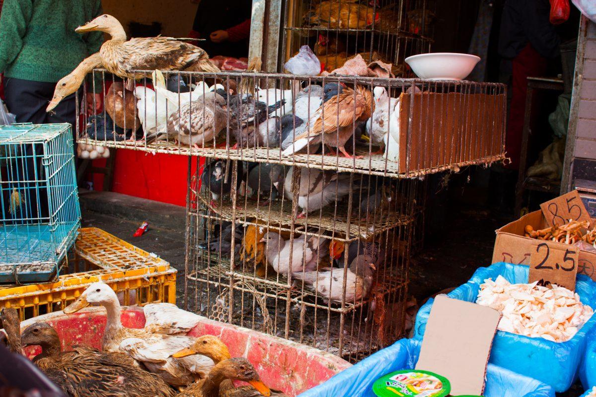 Animal cart