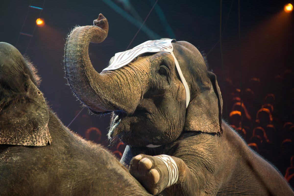 Circus Animal