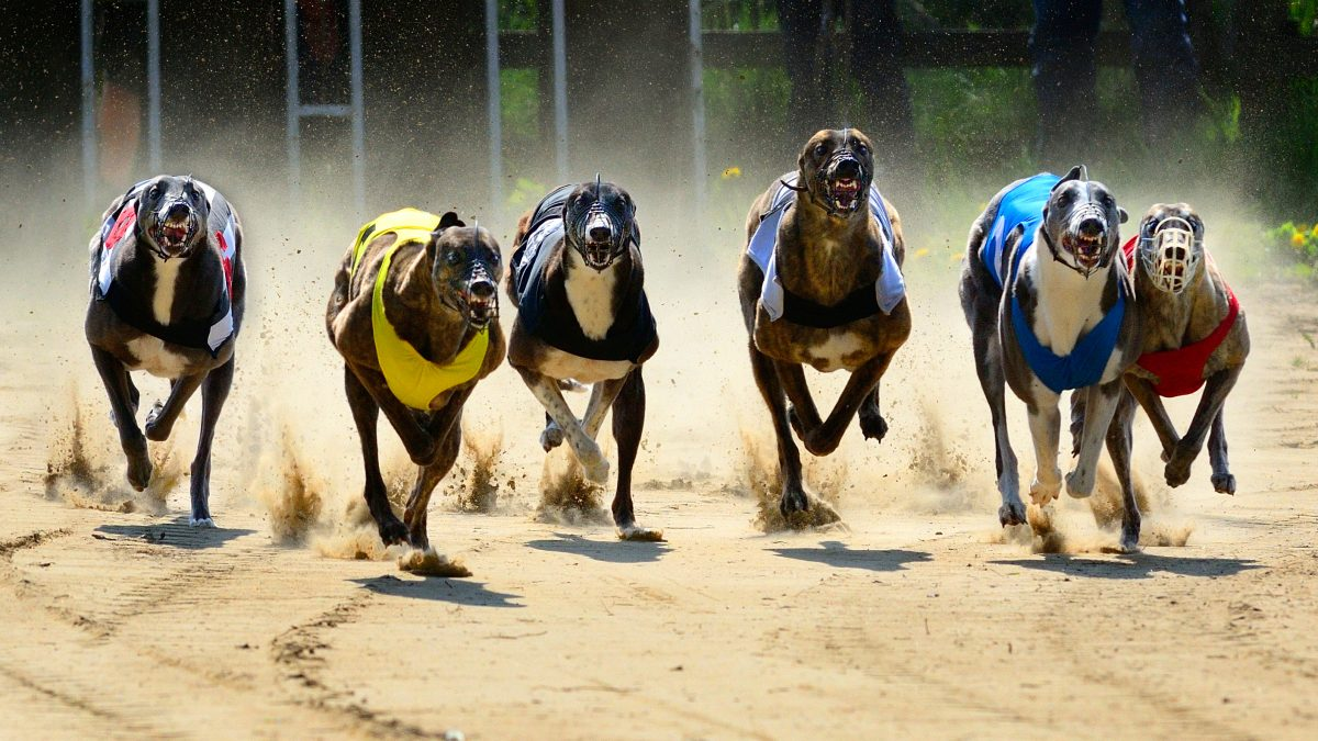 Trainer in Trouble for Giving Meth to Racing Greyhounds