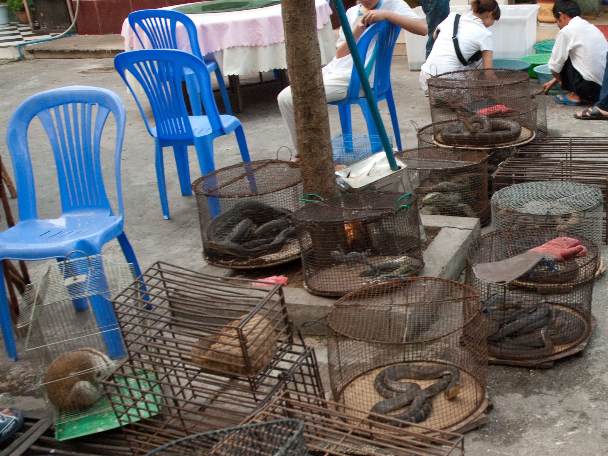 Markets selling live animals, or parts of wild animals, play a particular role in the transmission of zoonotic pathogens. Cropped version of photo by Dan Bennett, CC BY 2.0 via Wikimedia Commons.