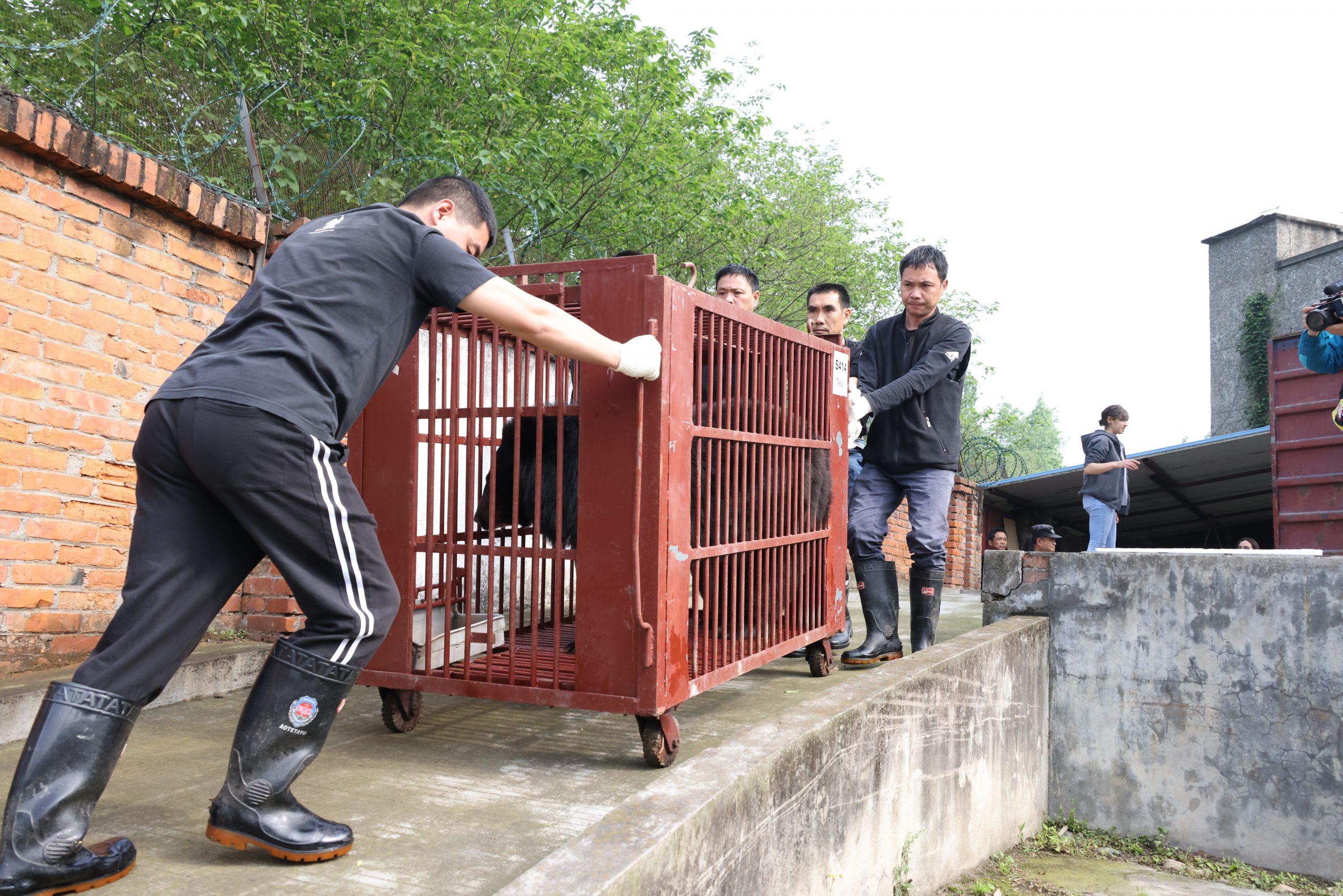 pushing moon bear cage