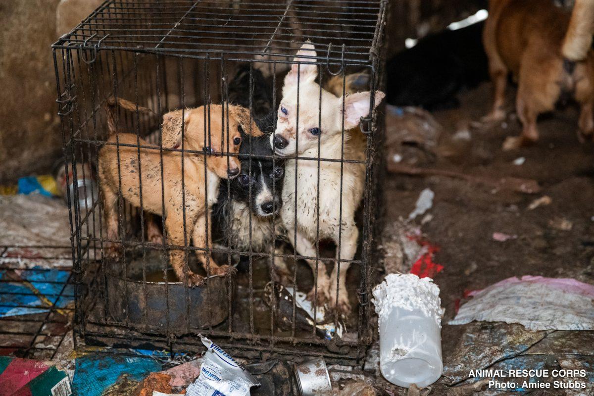 Animal Rescue Corps