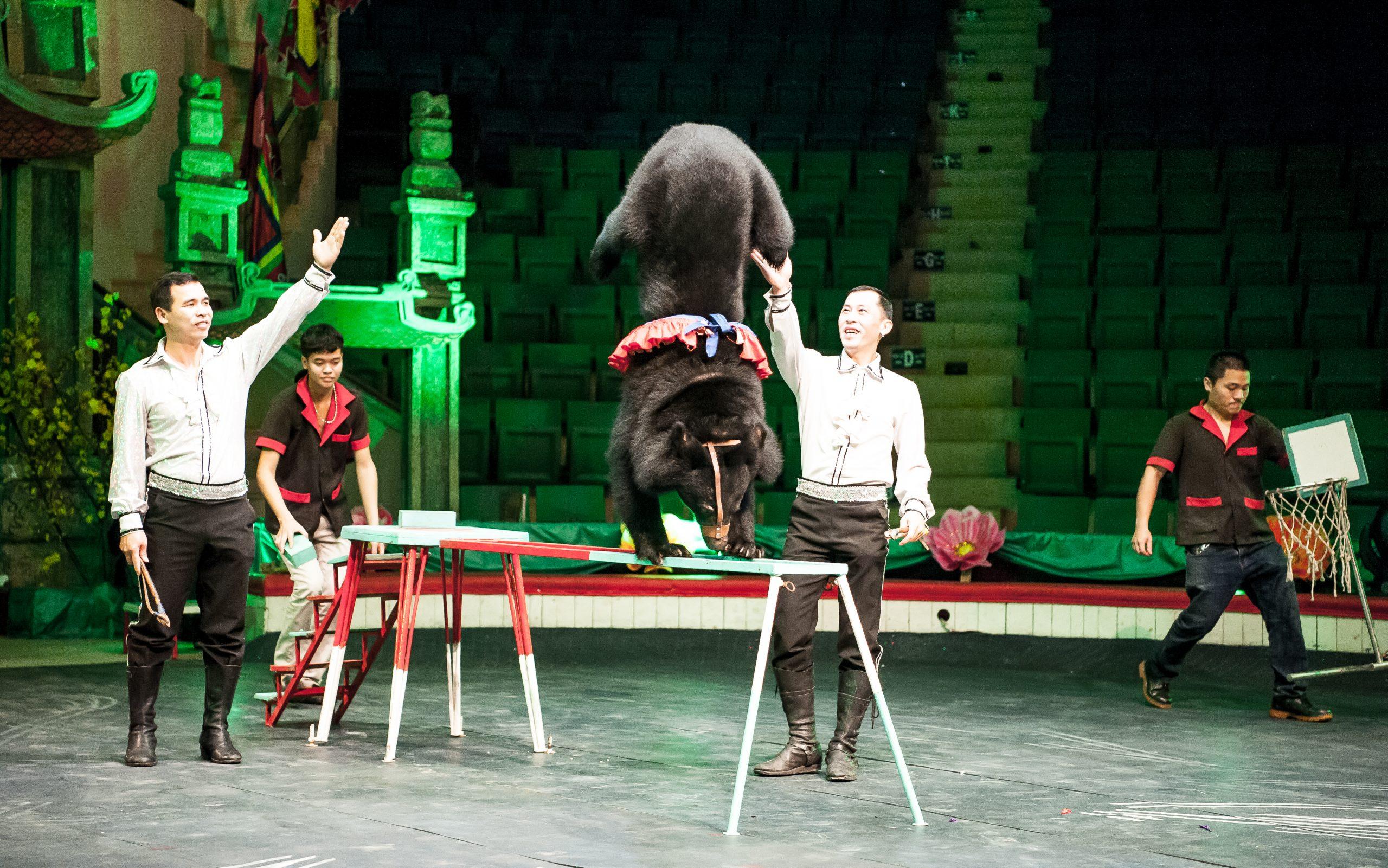 bear in handstand
