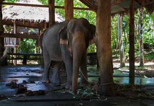 Jane Goodall Shares Video to Help Starving Elephants in Thailand