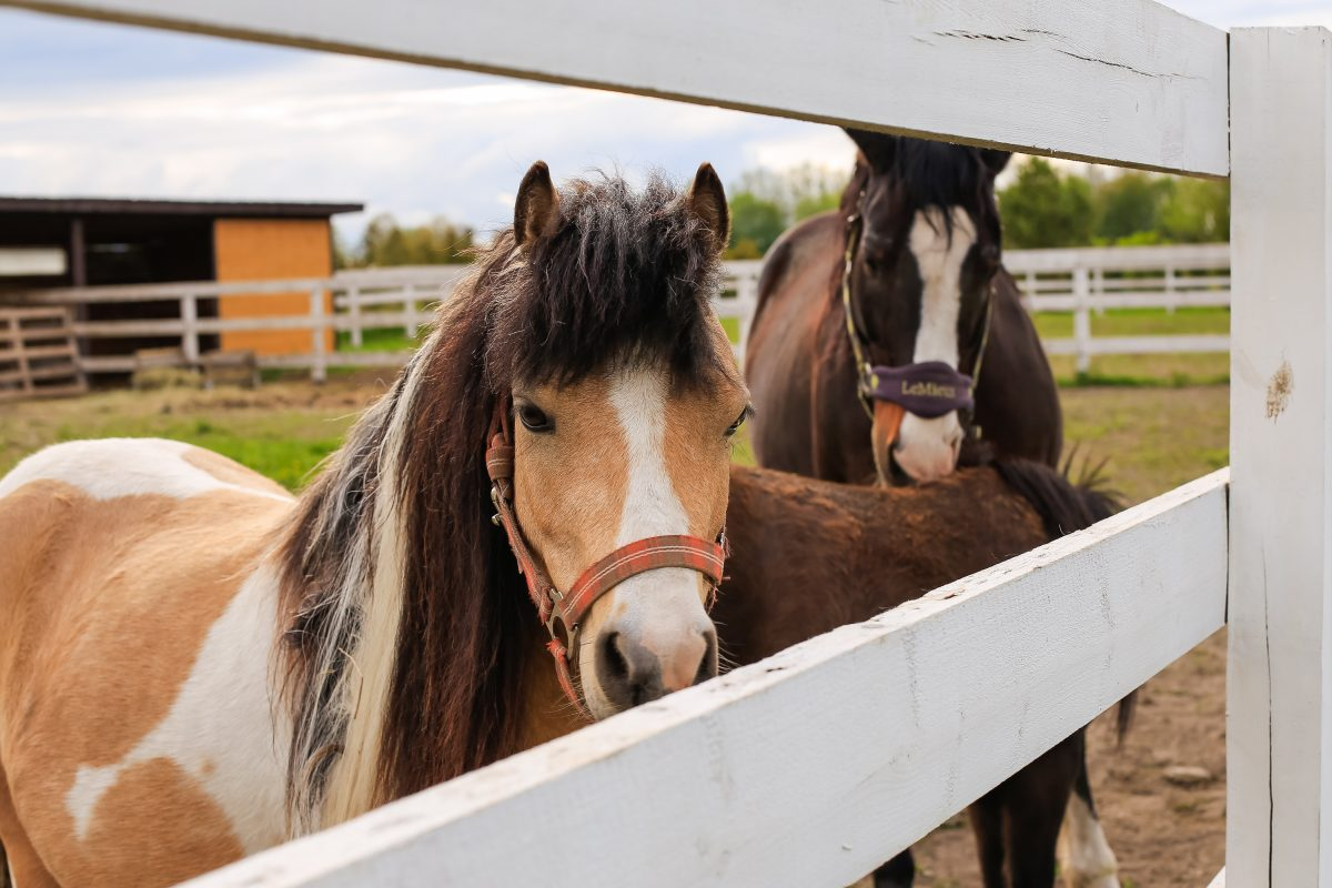 58 Horses Seized from Montana Ranch