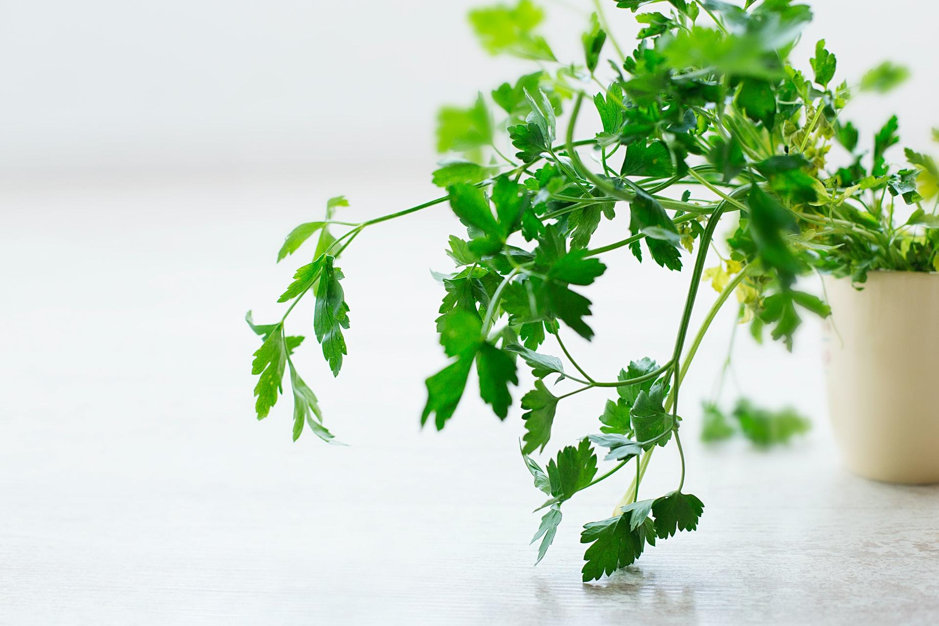 saving fresh herbs