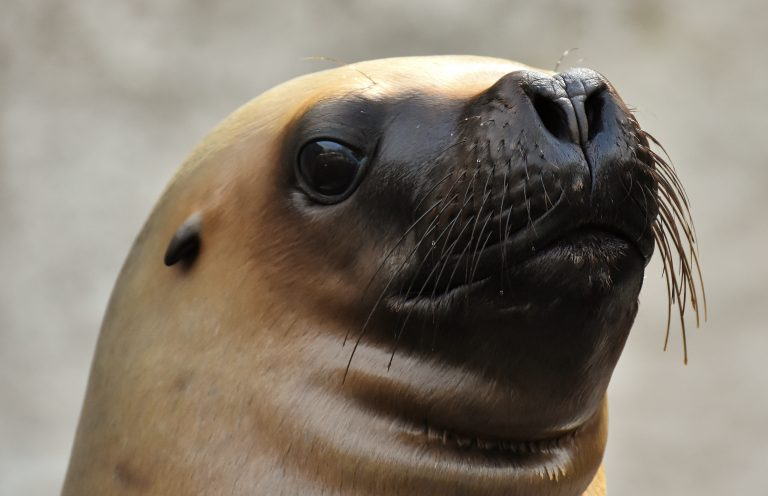 Town in Chile Visited by Masses of Sea Lions