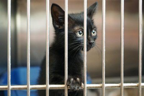 local animal shelter
