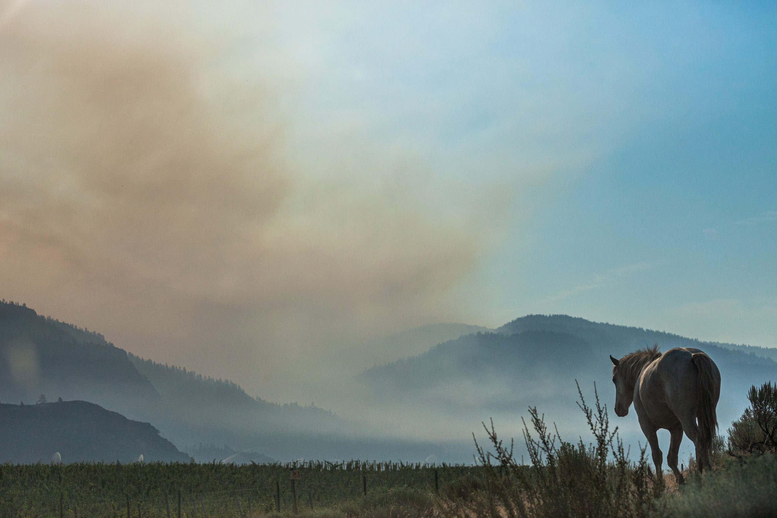 horse amidst wildfire