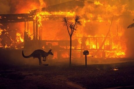 A kangaroo passes a burning house in the 2019 Australian wildfires