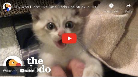 The Dodo/Youtube