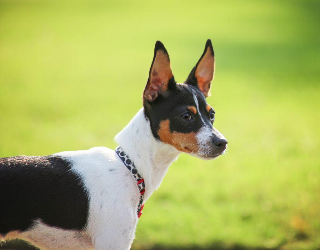 Meet Siggi The Dog Who Had Upside Down Paws