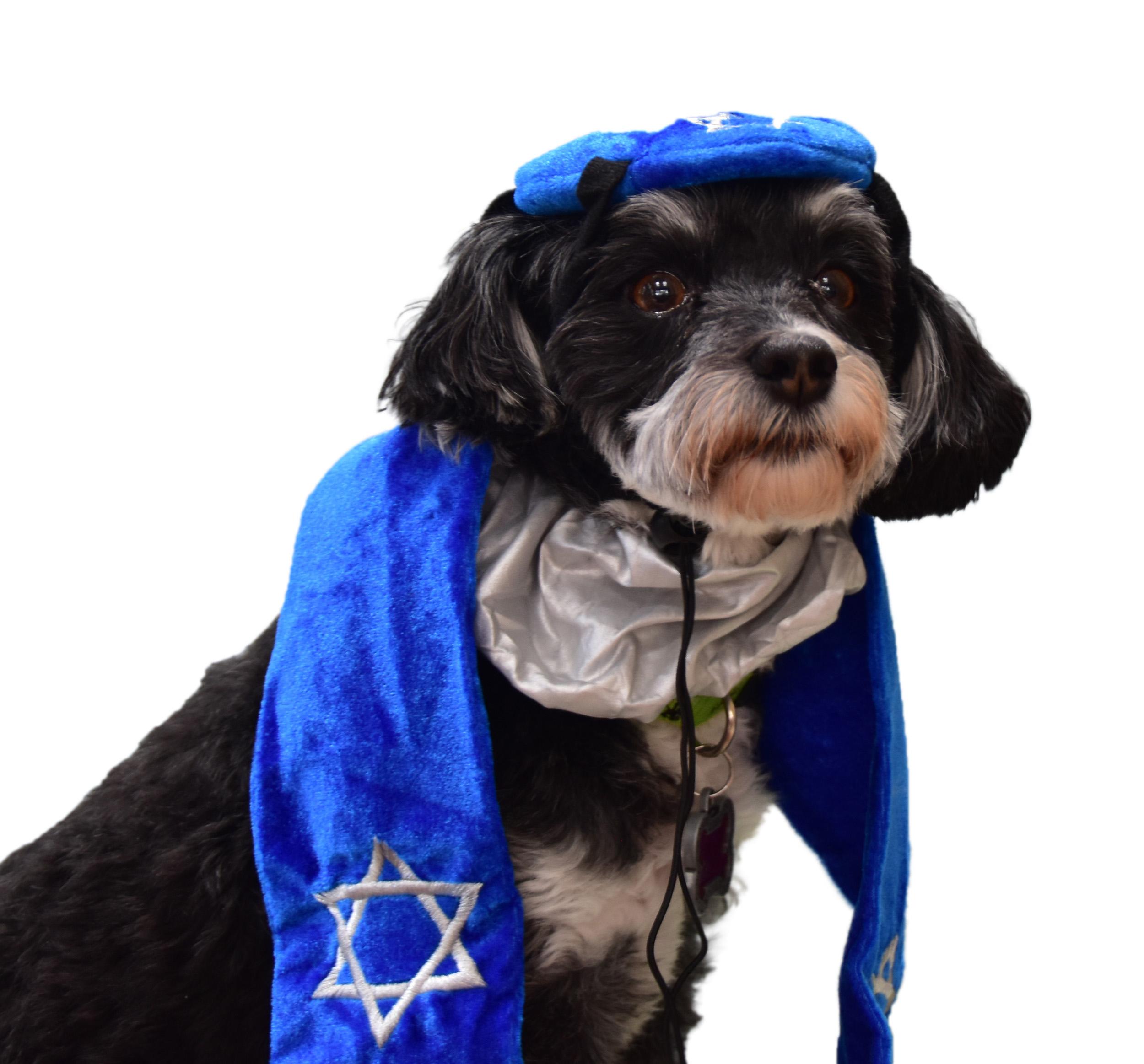 dog with kippah and tallit