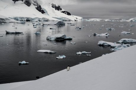 A single penquin stands on ice-covered land in Antarctica