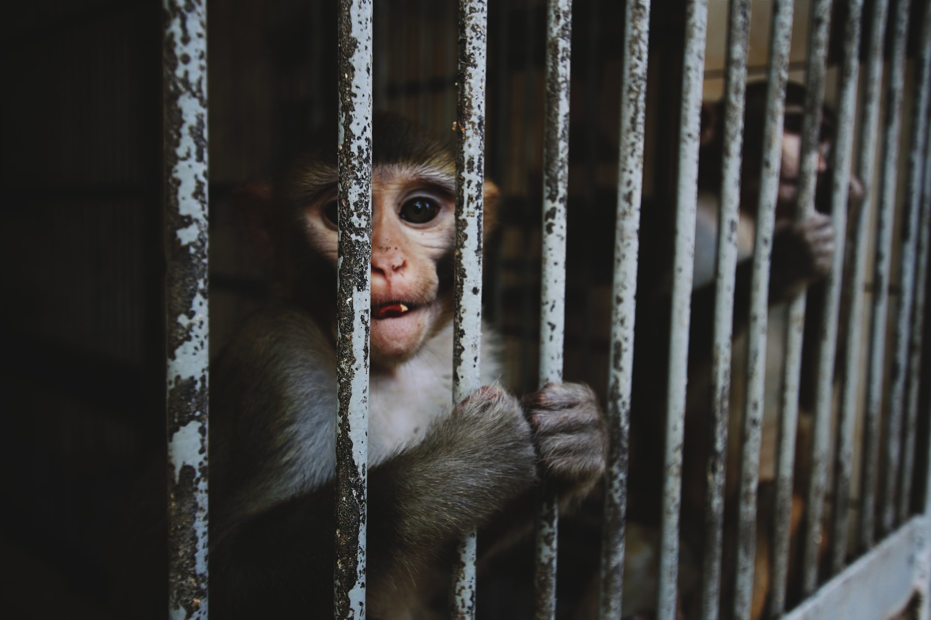 animal activists