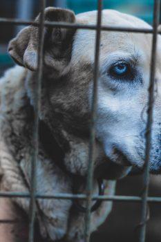 dog meat trader