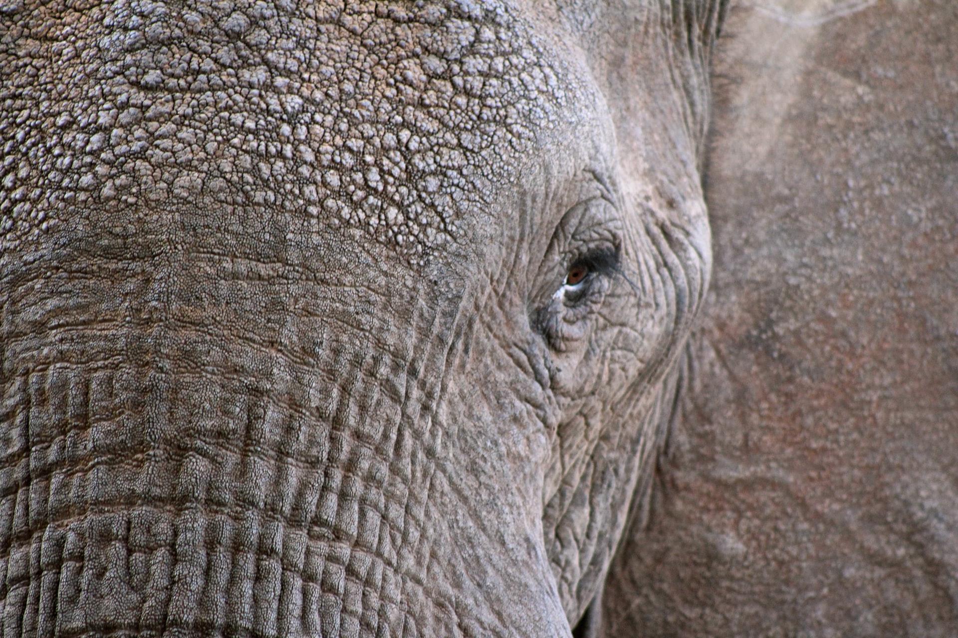 elephants to starve