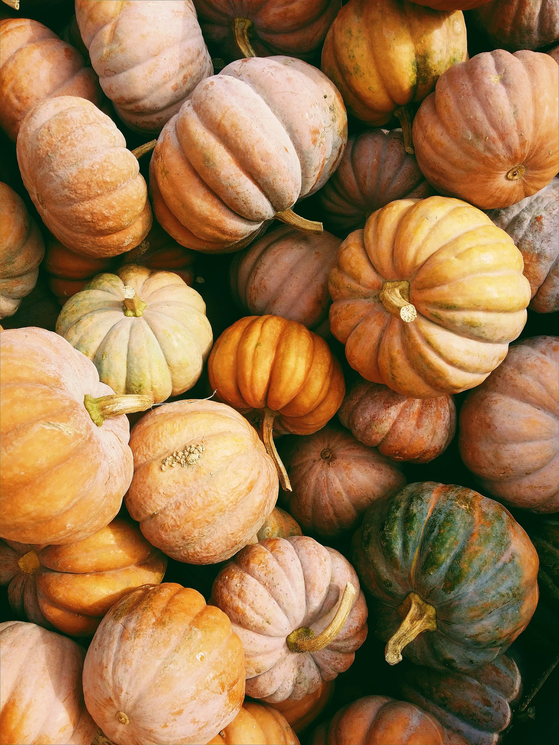 wasting pumpkins